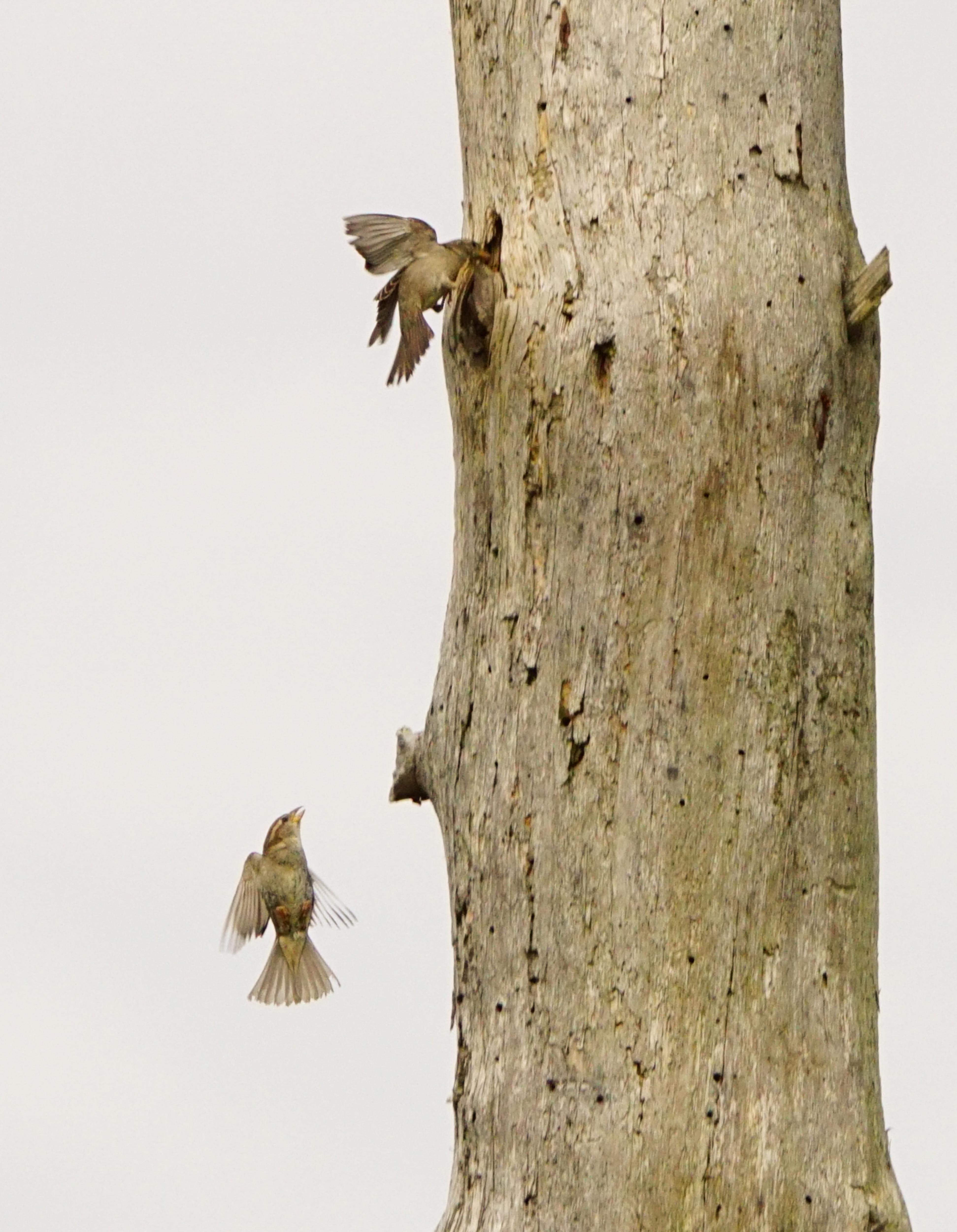 Birds in flight 1-2.jpg